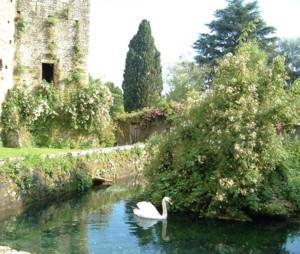 Detail of Ninfa Garden, Giardini Di Ninfa, Italy by Clive Nichols